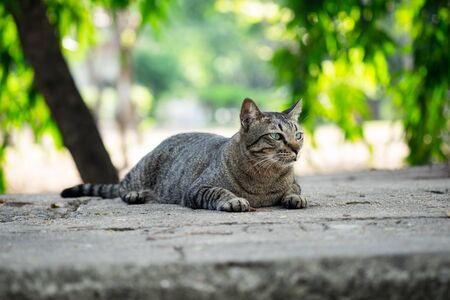 Cute tabby cat sitting on the concrete floor in the garden public park. Stock Photo