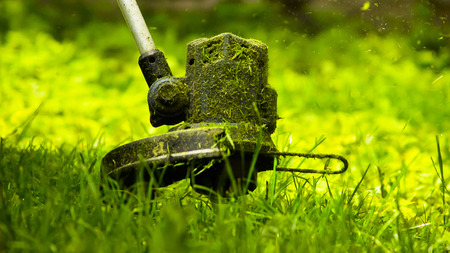 Grass Cutting Lawn Trimmer Stock Photo
