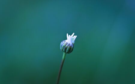 Flower Bud Stock Photo