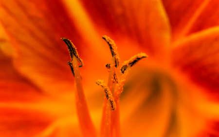 pollen: Pollen