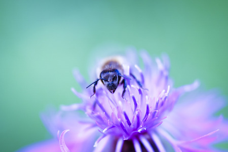 Bee flower Stock Photo