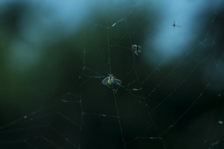 Spiders Web Macro