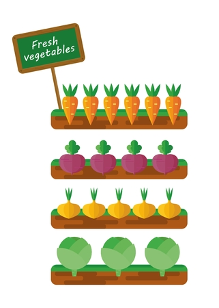 fertile: A set of images of the beds with vegetables. Carrots, beets, onions, cabbage. Vegetables for a vegetarian health food. Farmers and gardeners agriculture concept cartoon flat vector illustration. Objects isolated on a background.