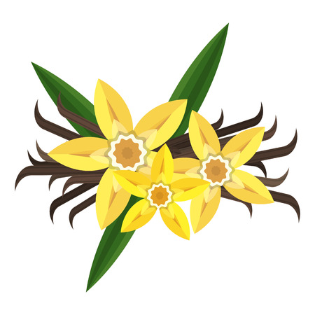 Vanilla flower with stitch and leaves. Spice for baking, pastry, cakes, for culinary products. Flat vector cartoon illustration. Objects isolated on white background.