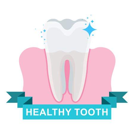 Healthy tooth and gum.