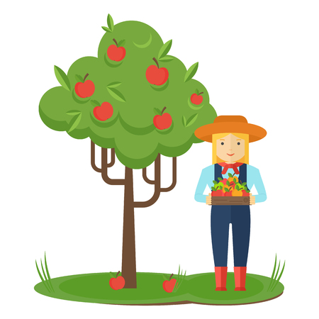 Apple picking. Farmer woman in the garden with boxes of apples in his hands. Farmers characters. Flat vector cartoon illustration. Objects isolated ongreen background.