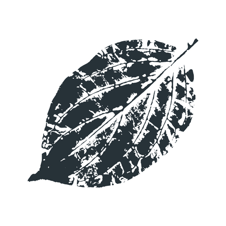 Vector Leaf print. Inkprinted leaves of the trees on paper. Traced vector image.