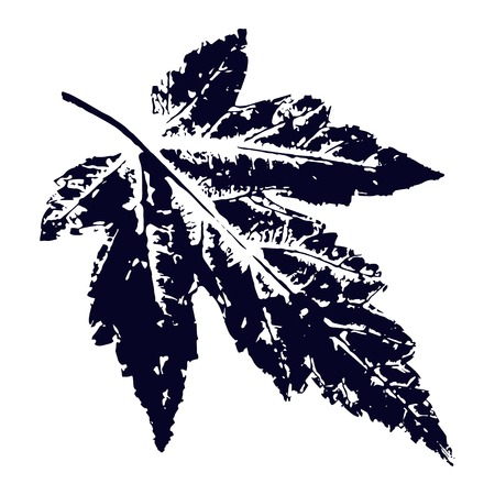 Vector maple Leaf print. Inkprinted leaves of the trees on paper. Traced vector image. Illustration