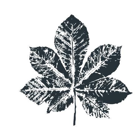 Vector de impresión de hoja de castaño negro. Hojas de los árboles impresas en tinta sobre papel. Imagen vectorial trazada.