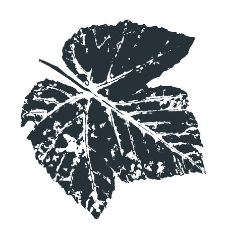 Impresión de hoja de uva de vector. Hojas de los árboles impresas en tinta sobre papel. Imagen vectorial trazada. Ilustración de vector