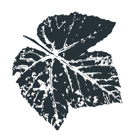 Vector grape Leaf print. Inkprinted leaves of the trees on paper. Traced vector image.