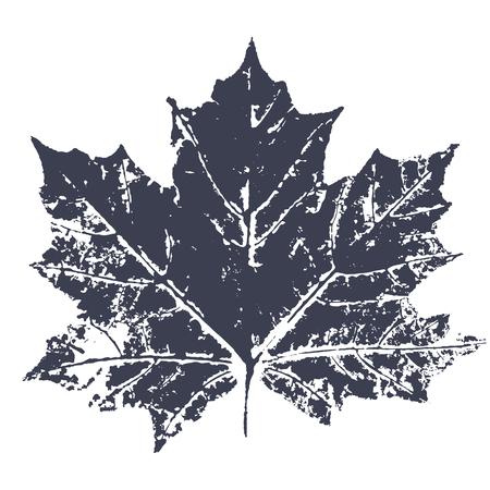 Impresión de la hoja de arce del vector. Hojas de los árboles impresas en tinta sobre papel. Imagen vectorial trazada.