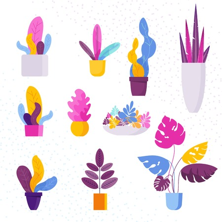 Collection of decorative Exotic tropical houseplants in a flower pot isolated on white background. Bundle of trendy plants, Set of natural home decorations. Flat colorful vector illustration.