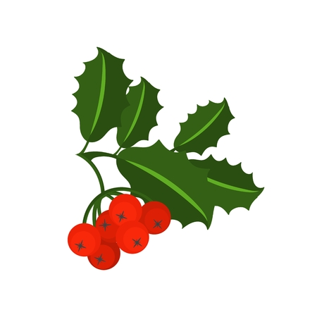 Holly berry branch. Leaves for traditional ornamental wreath from plants for greeting cards for for Merry Christmas and Happy New Year. Illustration