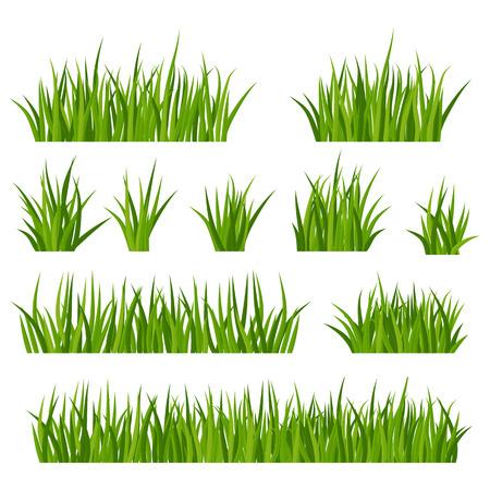 Satz grüne Grasbüschel mit Blumen auf einer Wiese oder einem Rasen. Sommerwiesenpflanzen, Kamillenblütenstand. Rustikale Landschaft, ländlicher Bauernhof. Vektorgrafik