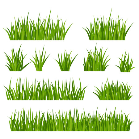 Zestaw kiści zielonej trawy z kwiatami na łące lub trawniku. Rośliny łąkowe, kwiatostan rumianku. Rustykalny krajobraz, gospodarstwo wiejskie. Ilustracje wektorowe