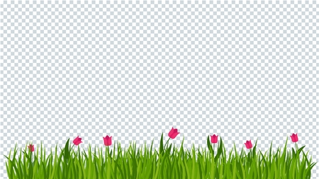 Tulip and a green grass border on on transparent background. Template for summer cards for birthday and holidays. Flat vector cartoon illustration.