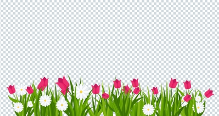 Daisies and tulips in green grass on transparent background bottom border. Template for summer cards for birthday and holidays. Flat vector cartoon illustration. Illustration