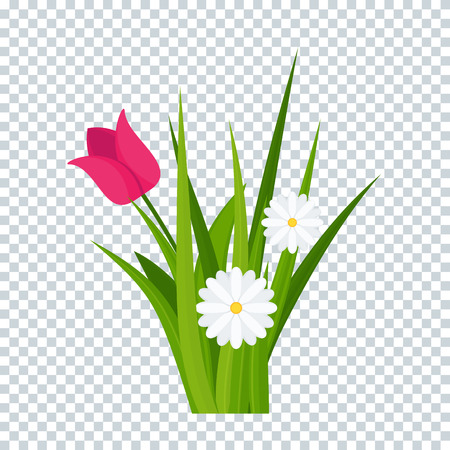 Daisies and tulips in green grass on transparent background bottom border. Template for summer cards for birthday and holidays. Flat vector cartoon illustration. Ilustrace