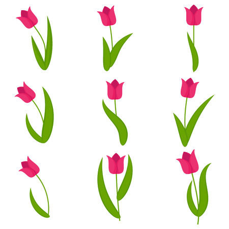Tulips flower set on transparent background. Template for summer cards for birthday and holidays. Flat vector cartoon illustration.