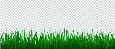 Green grass border on transparent