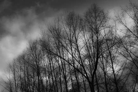 outumn: black and wight background, dark forest and clouds