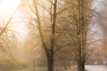 outumn: foggy evening or morning in the park