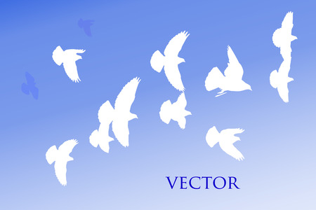 flock: a flock of white birds is dashingly flies in the sky Illustration