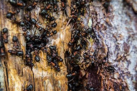 doings: ants Stock Photo