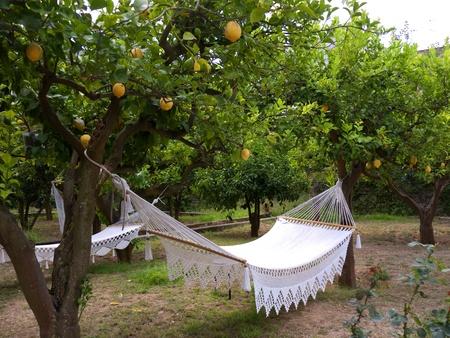 capri: Hammock in Lemon Grove in Anacapri, Capri, Campania,Italy Stock Photo