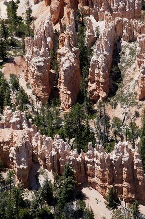rocky mountain juniper: The Hoodos of Bryce Canyon Utah USA