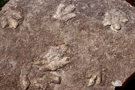 Dinosaur fossil footprints at Lake Powell between Arizona and Utah USA