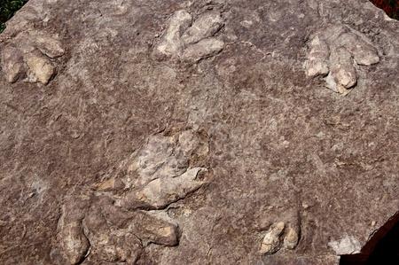 Dinosaur fossil footprints at Lake Powell between Arizona and Utah USA