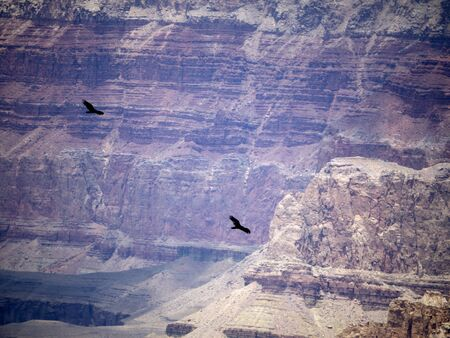 mesas: Birds Over the Grand Canyon ArizonaNevada USA