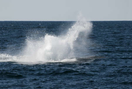 Whale watching off Cape Cod Massachusetts USA photo