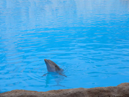 Dolphin in Puerto de la Cruz in Tenerife in the Canary Islands Spain photo