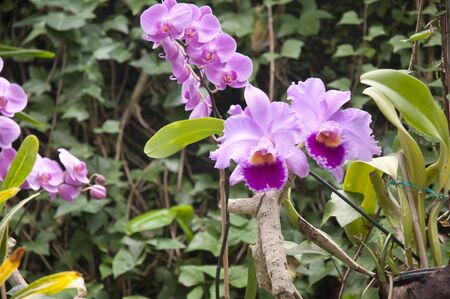 orchid in Puerto de la Cruz in Tenerife Canary Islands Spain