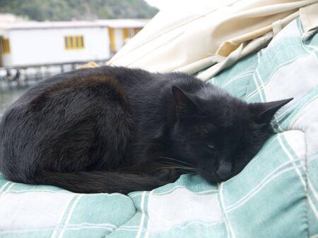 marqueteria: Gato en Marina Grande al puerto de pescadores de Sorrento, en el sur de Italia