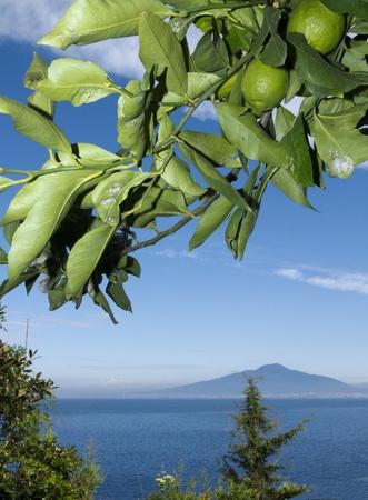 marqueteria: Monte Vesubio y la bah�a de N�poles, en Campania Italia desde debajo de un �rbol de lim�n Foto de archivo