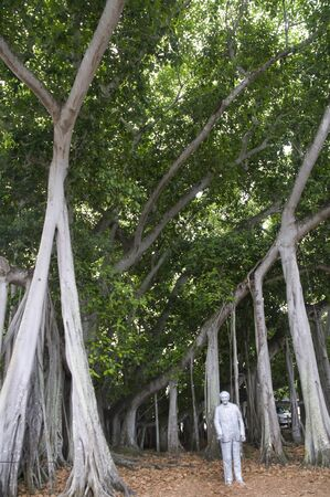 myers: Banyan Tree in Fort Myers Florida USA Stock Photo