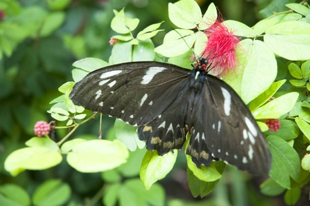 Butterflies in Key West Florida USA photo