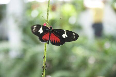 north american butterflies: Butterflies in Key West Florida USA