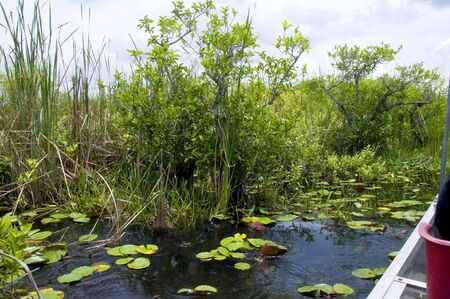 sawgrass: The Everglades  in the Southern State of Florida in the USA