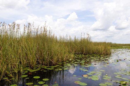 The Everglades  in the Southern State of Florida in the USA