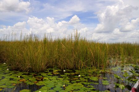 The Everglades  in the Southern State of Florida in the USA photo