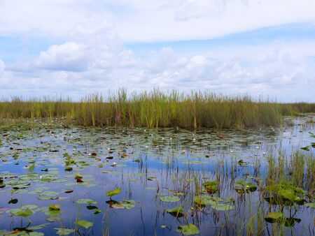 The Everglades  in the Southern State of Florida in the USA Stock Photo - 11563770