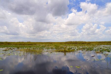 Reflections in he Everglades  in the Southern State of Florida in the USA photo