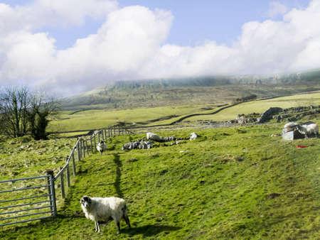 wensleydale: Los valles de Yorkshire en el norte de Yorkshire, Inglaterra, Foto de archivo