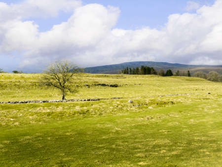 cowslip: Yorkshire Dales Countryside in Northern England Stock Photo