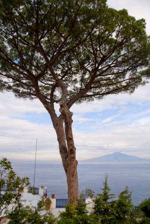 Mount Vesuvius and the Bay of Naples in Campania Italy from under a lemon tree